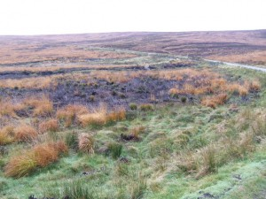 The_peat_bogs_by_the_R115_military_road_-_geograph.org.uk_-_627256